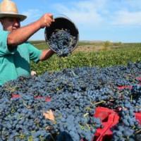 A la découverte des vins roumains #roumanie #vins #tourisme #business