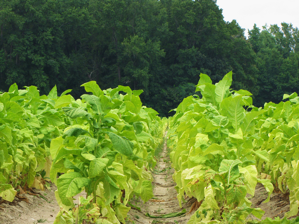 Tobacco: EU-wide track and trace system